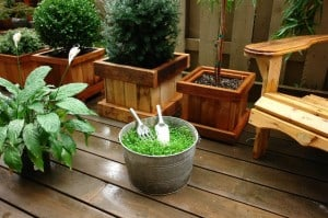 Container Plants For Your Deck